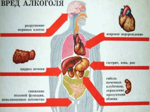 На фото - влияние алкоголя на органы, farmamir.ru