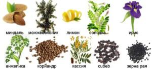 На фото - травы для джина Бомбей Сапфир, homecocktail.ru