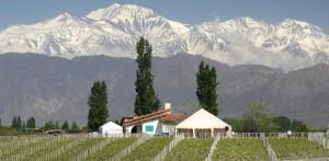 Игристое вино Боско – вершина успеха компании Luidgi Bosca