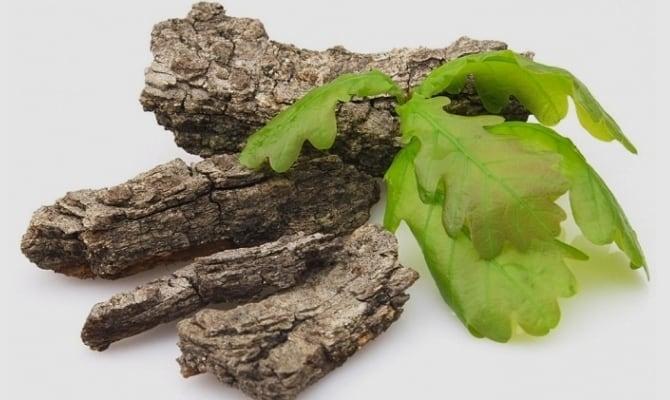 Настойка коры дуба – кладезь полезных веществ и оригинальность вкуса