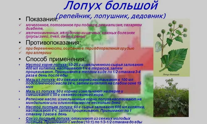 Настойка лопуха – горький источник силы и здоровья