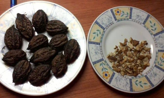 Лечение черным орехом