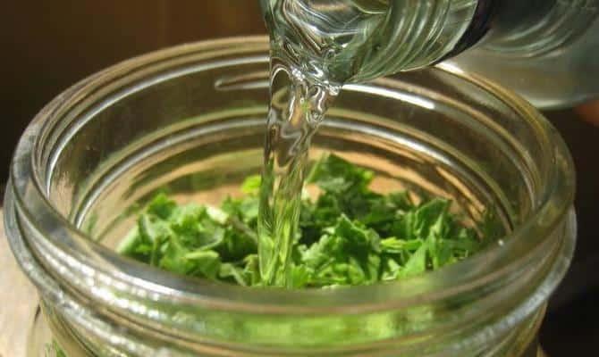 Как применяется настойка перца водяного: инструкция