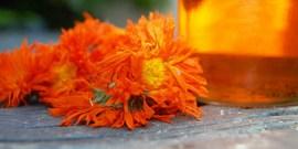 Настойка календулы – свойства и лечение в домашних условиях
