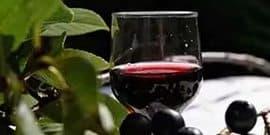Чем хороша настойка из черноплодной рябины