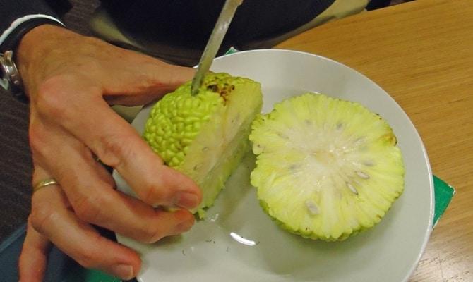 Приготовление настойки из плодов маклюры