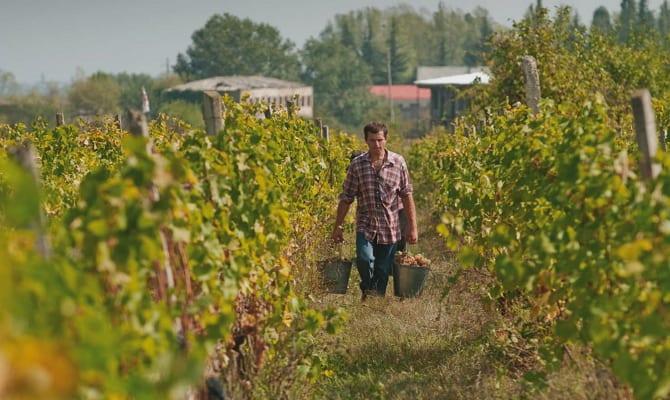 Вино Телиани: история появления