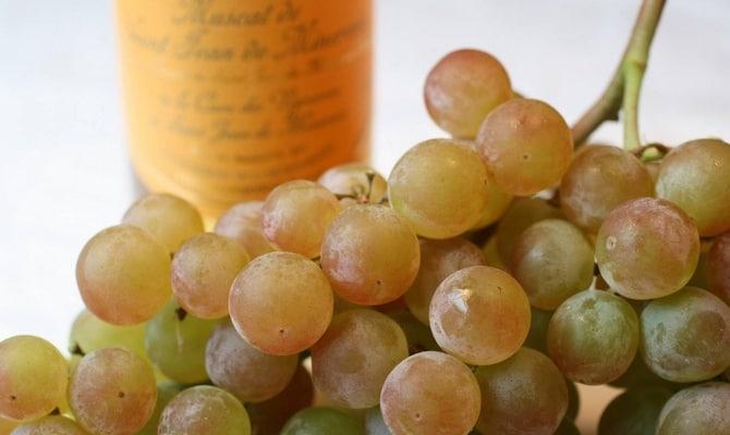 Итальянское игристое вино Мартини