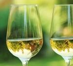 Ламбруско: легкое белое игристое вино для ценителей и не только