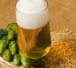 Настоящее живое пиво: состав и рецепты приготовления