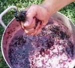 Как сделать виноградное вино в домашних условиях