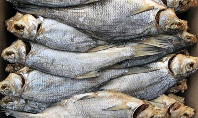 Чем полезна рыба?