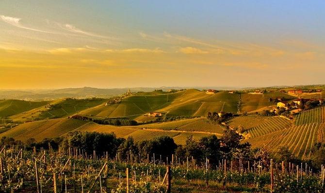 Винодельческий район Барбареско: вино высокого качества