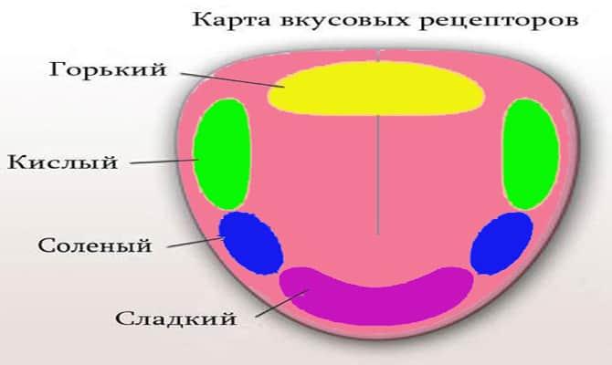 Роль бокалов с точки зрения физиологии