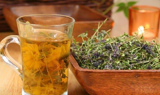 Исцеление лекарственными травами – что поможет бросить пить?
