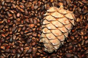 На фото - кедровые орешки, zdorovieinfo.ru