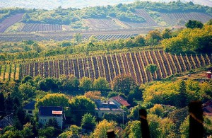 География токайского вина