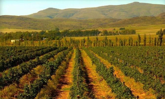 На фото - винодельческий регион Мендосы