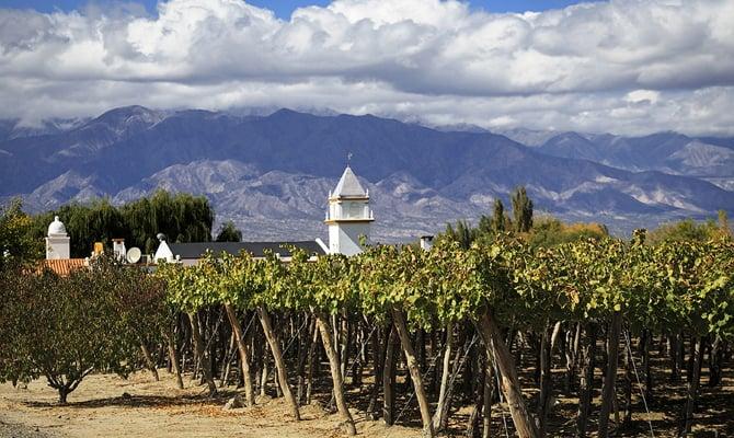 На фото - виноградники Аргентины