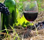 Аргентинское вино – конкуренция винам Старого Света