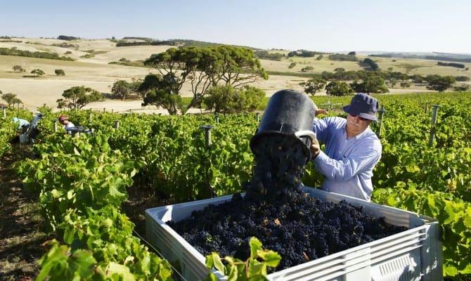 Винодельческий регион Австралия
