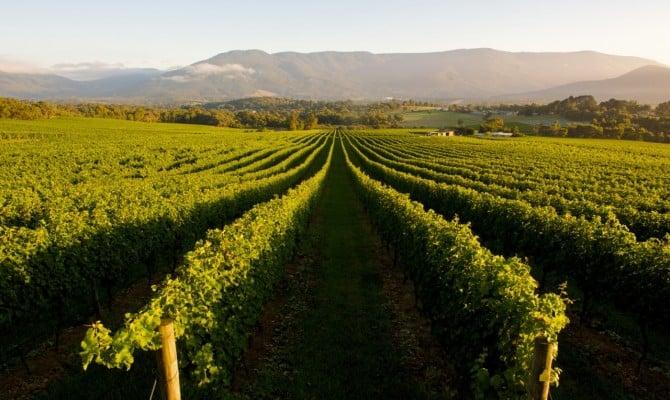 Виноградники западной Австралии
