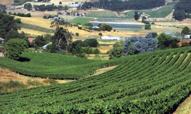 Виноградники южной Австралии