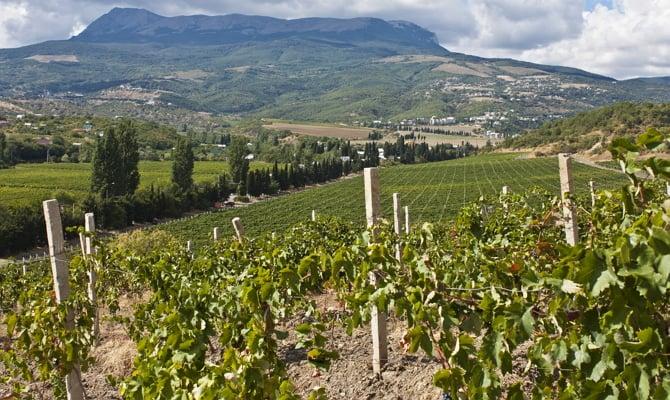 Виноградарство на полуострове Крым