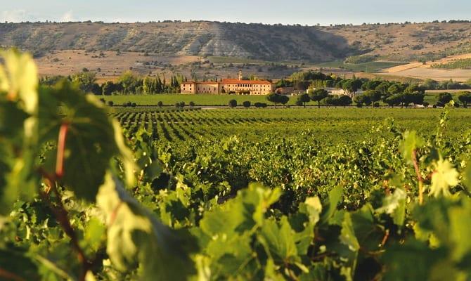 Виноградники Испании – гордость Пиренейского полуострова