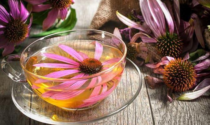 Рецепты настоек из лекарственных растений
