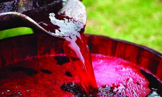 Подготовка сусла для вина