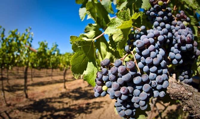 Грузинское вино - мировой бренд
