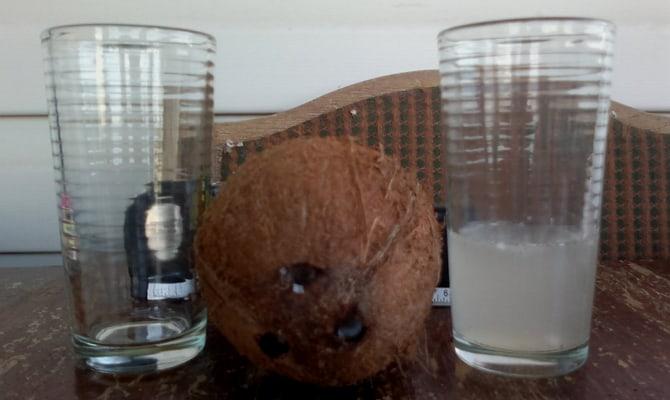 История кокосовой водки