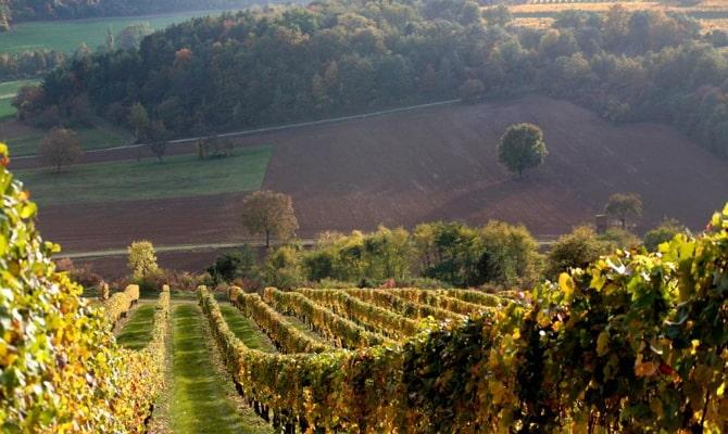 Какова правда о бургундском вине