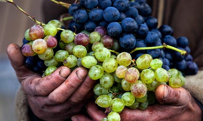 Технология приготовления красного вина и его значение в истории мира