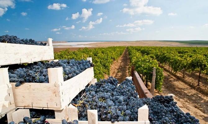 Критерии отбора: сорта винограда, ценовой аспект и сочетание с остальными продуктами